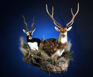 Professional Taxidermy Services East Earl Pa Turkey