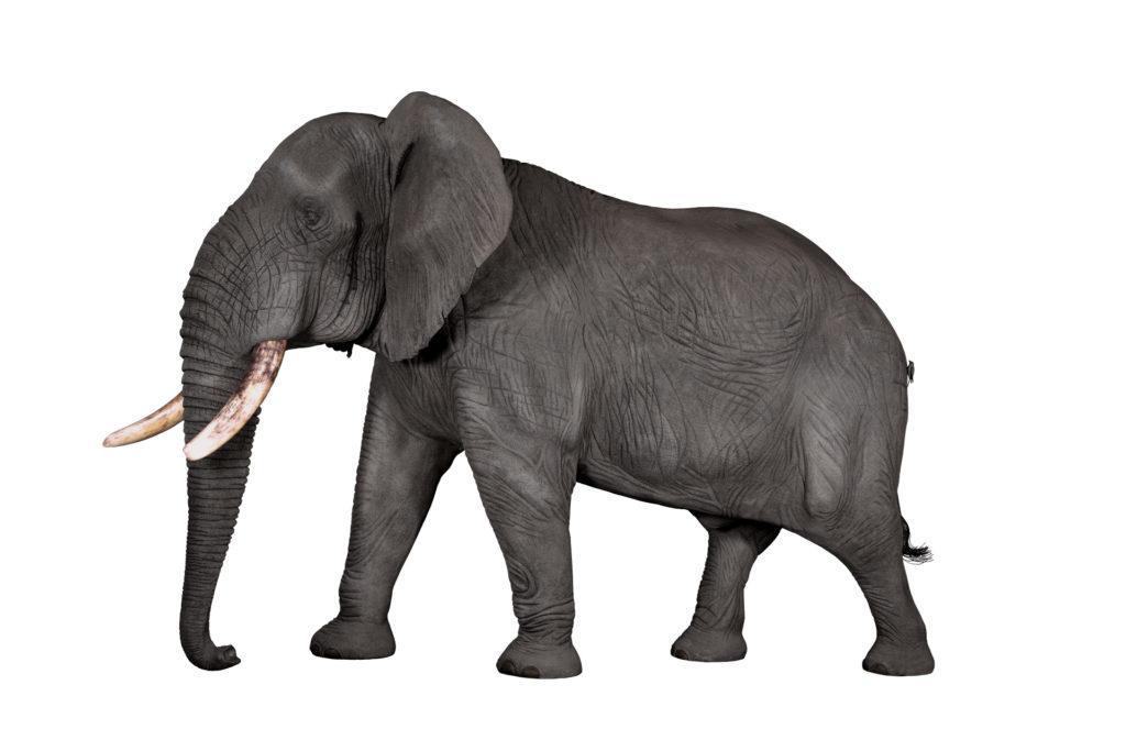 Elephant Replica